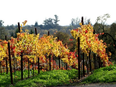 Fall in Northern California: Russian Hill Vineyards by Remy Gervais
