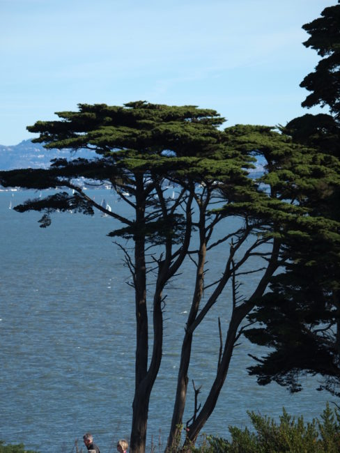 Wordless Wednesday: California Cypress San Francisco Adventures