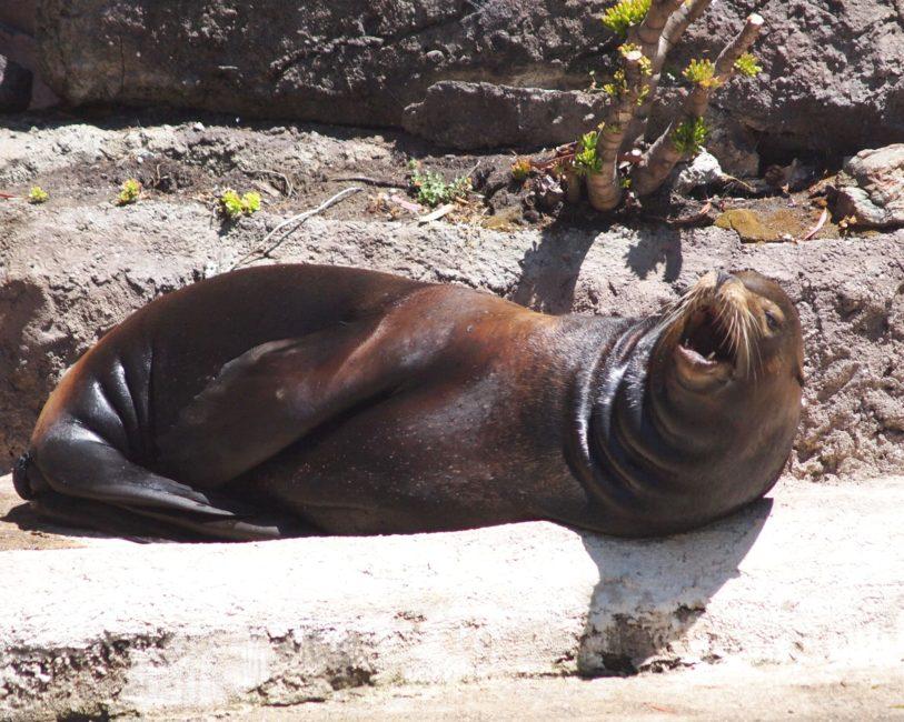 Wordless Wednesday: San Francisco Zoo Inspires Pro Photography Dreams